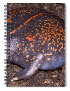 Mexican Burrowing Toad Spiral Notebook