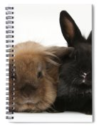 Rabbits Spiral Notebook