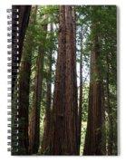 Redwoods Sequoia Sempervirens Spiral Notebook