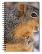 Squirrel Spiral Notebook