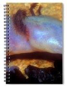 Texas Blind Salamander Spiral Notebook