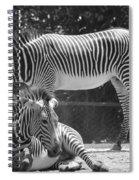 Zebras In Black And White Spiral Notebook