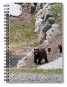 Black Bear Family Spiral Notebook