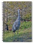 9- Sandhill Crane Spiral Notebook