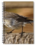 Yellow-rumped Warbler Spiral Notebook