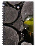 A B S O R B Spiral Notebook
