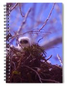 A Baby Red Tail Gazing From Its Nest Spiral Notebook