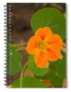 A Beautiful Orange Trumpet Shaped Flower With Green Leaves Spiral Notebook