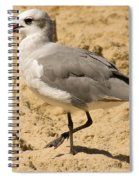 A Bird Of Many Colors Spiral Notebook