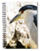 A Black-crowned Night Heron  Spiral Notebook