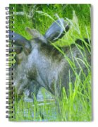 A Bull Moose Wading His Pond Spiral Notebook