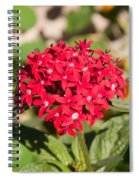 A Bunch Of Small Red Flowers Spiral Notebook