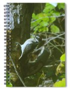 A Busy Woodpecker  Spiral Notebook