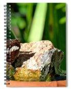 A Butterfly Enjoys A Drink Spiral Notebook