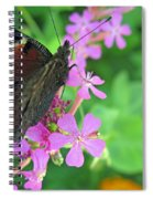 A Butterfly On The Pink Flower 2 Spiral Notebook
