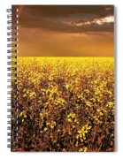 A Field Of Canola With A Rainbow Spiral Notebook