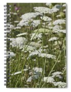 A Field Of Queen Annes Lace Spiral Notebook