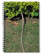 A Garden Water Pipe Emerging From Within A Hedge Spiral Notebook