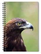 A Golden Moment Spiral Notebook