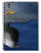 A Gull Reflects Spiral Notebook