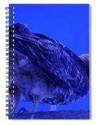 A Hawk Looks Back  Spiral Notebook
