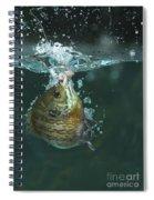 A Hooked Bluegill Spiral Notebook
