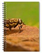 A Horse Fly Posing 1 Spiral Notebook