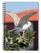 A Juvenile Herring Gull Spiral Notebook