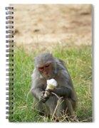 A Monkey Enjoying An Ice Cream Cone Inside Delhi Zoo Spiral Notebook