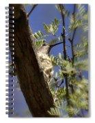 A Nesting Hummingbird Spiral Notebook