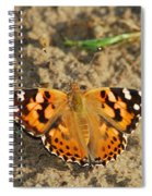 A Painted Lady Looking For Sex 8619 3369 Spiral Notebook