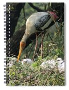 A Painted Stork Feeding Its Young At The Delhi Zoo Spiral Notebook