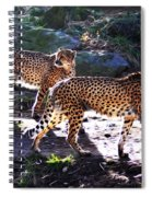 A Pair Of Cheetah's Spiral Notebook