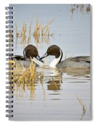 A Pair Of Northern Pintail Ducks  Spiral Notebook