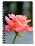 A Peachy Pink Delight Spiral Notebook