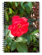 A Pink Rose Being Backlight With The Petals Looking Translucent Spiral Notebook