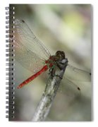 A Red Dragonfly Spiral Notebook