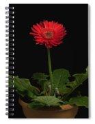 A Red Gerbera In A Pot Spiral Notebook