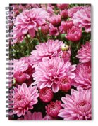 A Sea Of Pink Chrysanthemums Spiral Notebook