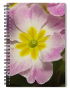 A Shy Flower  Spiral Notebook