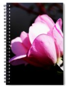 A Simple Rose Spiral Notebook