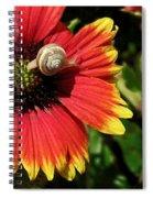 A Snail's Pace Spiral Notebook