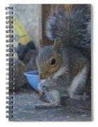 A Squirrel In 55 Degree Weather Spiral Notebook