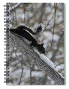 A Squirrel Snow Cone Spiral Notebook