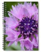 A Summer Whisper Spiral Notebook