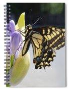 A Swallowtail Butterfly Spiral Notebook