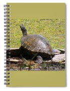 A Turtle Sunning Spiral Notebook