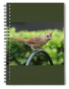 A Warm Hello  Spiral Notebook