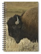 A Yellowstone Bison 9615 Spiral Notebook