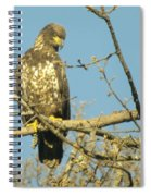 A Young Eagle Gazing Down  Spiral Notebook